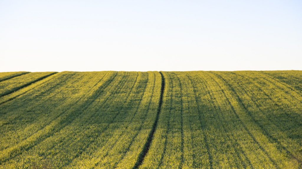 Somerset field